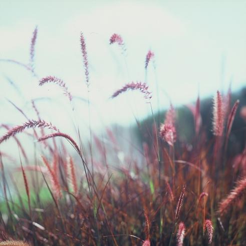 Changing Winds, Spring, Kevin Dooley, Flickr