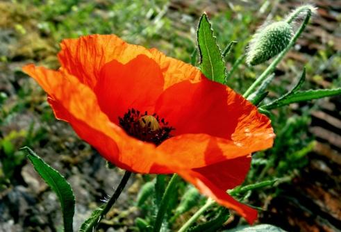 Flower, Spring, Summer, Sunshine,