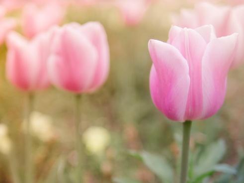 Flowers, Beautiful, Beauty, Nature, God, Love, Light, Peace, Spring, Summer
